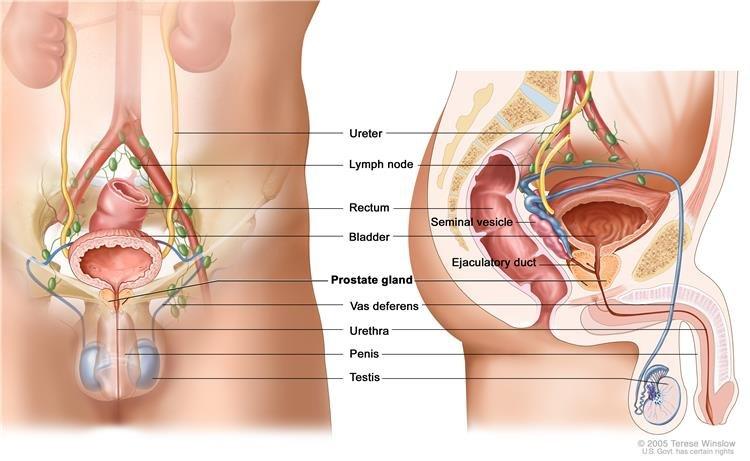 Prosztatitis és emelkedett leukociták kezelése